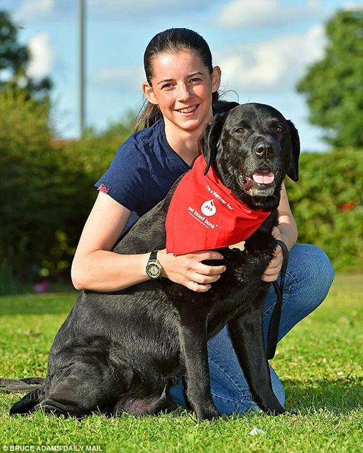 Cảm phục chú chó anh hùng hiến máu cứu 104 anh em khác