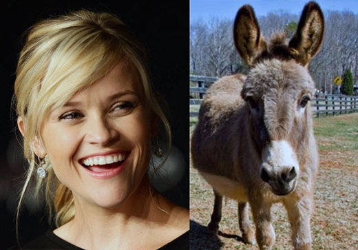 Nữ diễn viên Reese Witherspoon đã mua hai con lừa làm thú cưng vào năm 2010. Cô đặt tên chúng là Honky và Tonky. Không những thế,Reese còn sở hữu 2 con lợn, 3 con dê, 20 con gà và 3 con chó.