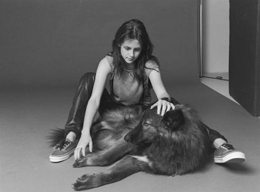 Ngôi sao trẻ Kristen Stewart đã từng khoe chú chó lai sói Hybrid của mình trong một số bức ảnh.