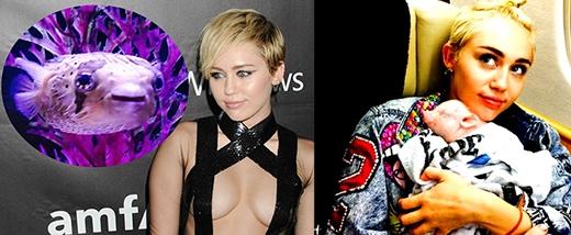 Nữ ca sĩ nổi loạn Miley Cyrus sở hữu hai vật nuôi khá lạ là cá nóc và lợn cảnh.