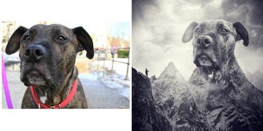 Con người có đỉnh Everest thì loài vật cũng có đỉnh... everdog nhé!