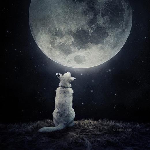 """""""Khi nào thì mới được lên cung trăng chơi với chị Hằng?."""