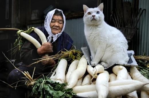 Ngưỡng mộ tình bạn đẹp của chú mèo và bà cụ 80 tuổi
