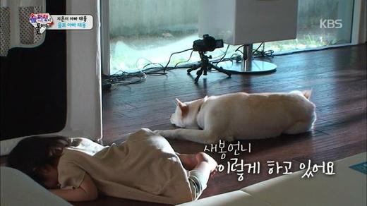 Khoảnh khắc đáng yêu khi chú cún Sebomnằm dài bên cạnh cô chủ nhỏJi On.