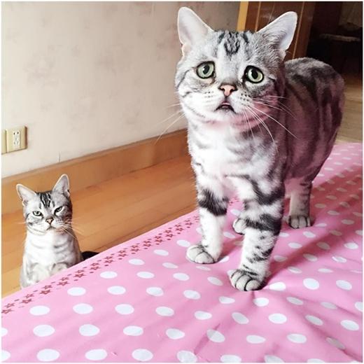 Ngỡ ngàng với chú mèo có khuôn mặt đáng thương