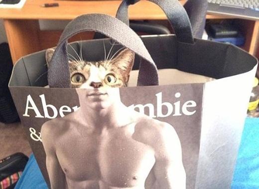 Chú mèo ngộ nghĩnh với cơ bắp lực lưỡng.