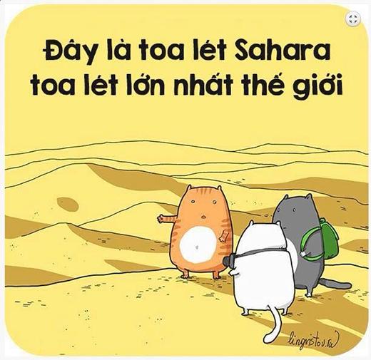 Đối với những chú mèo thì: Ở đâu có cát, ở đó có toa lét!.