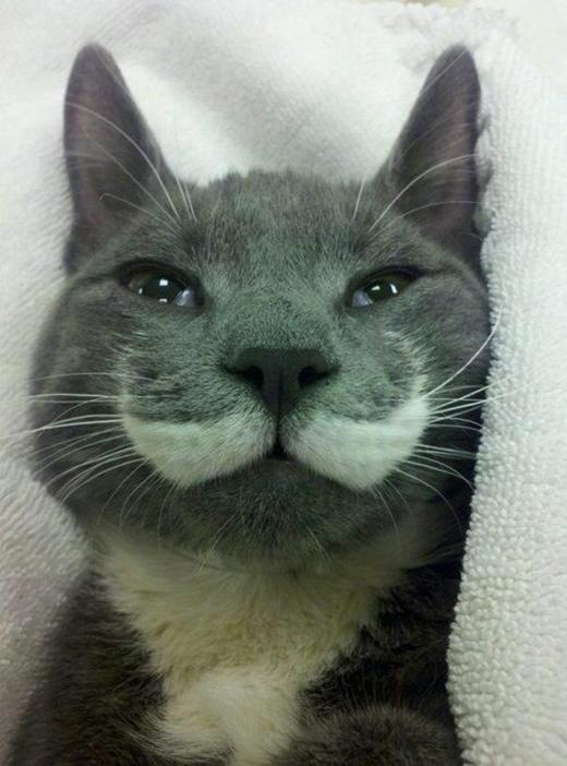 """Quả là một kiểu ria mép mustache đầy quyến rũ và """"quyền lực""""."""