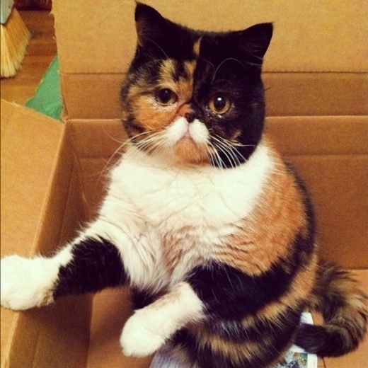 Màu sắc tự nhiên của chú mèo tam thể này thực sự làm nên một bộ râu trông rất độc đáo.