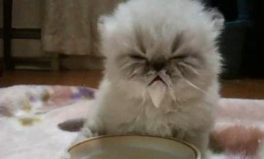 """Chòm râu dài của """"lão"""" mèo trắng cáu kỉnh này sẽ khiến bạn phải giật mình."""