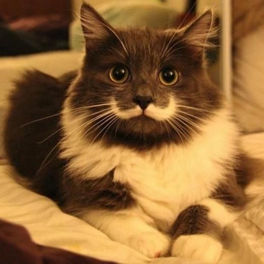 """Chú mèo này trông rất ra dáng một """"bá tước uy quyền"""" với chòm râu trắng nổi bật phải không nào?"""