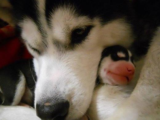 Khoảnh khắc cha con nhà cún ôm nhau cực tình cảm.
