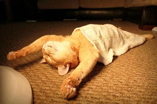 Giơ tay đầu hàng cơn buồn ngủ, không thèm chống cự nữa đâu!