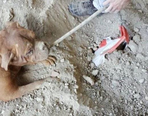 Cư dân mạng phẫn nộ trước bức ảnh chú chó bị chủ chôn sống