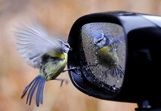 Mình đã đẹp trai sẵn rồi, nhưng hình như cái đứa trong gương còn đẹp hơn!.