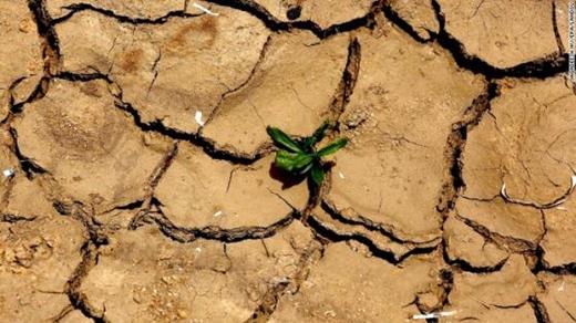 Mặt đất nứt nẻ.Những chồi cây bé nhỏ cũng phải đấu tranh vì sự sống.