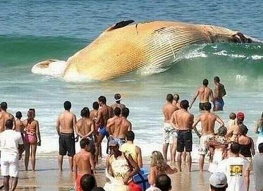 Mọi người ngỡ ngàng trước xác một chú cá voi trôi dạt vào bờ biển.