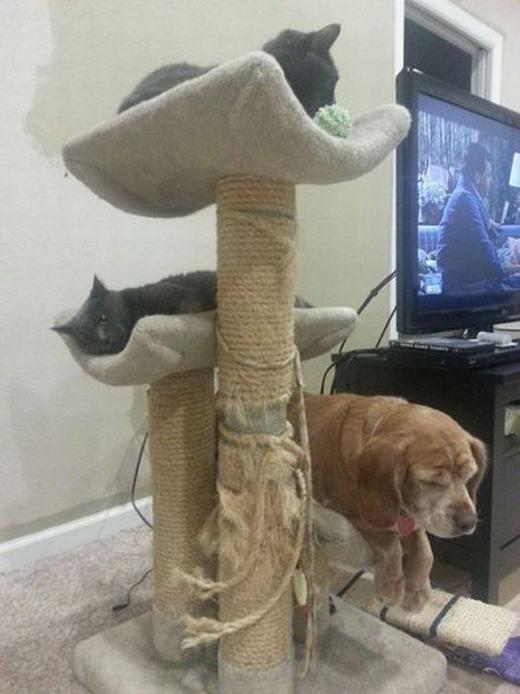 Nhà cao tầng cho thú cưng.