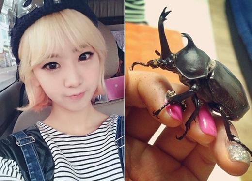 Bọ cánh cứng, côn trùng các loại chính là những người bạn thân thiết của Hyeyeon (BESTie).