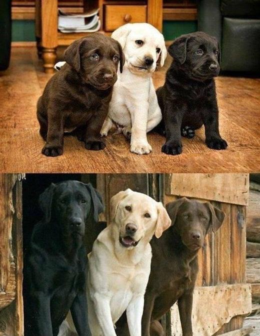 Bức hình ngày ấy - bây giờ của ba chú cún vô cùng đáng yêu này chỉ trong thời gian ngắn đã hút hơn 285.000 lượt thích cùng hàng ngàn bình luận.