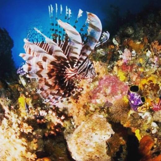 San hô mang đủ màu sắc sặc sỡ và sinh động là một điểm thu hút của Raja Ampat.