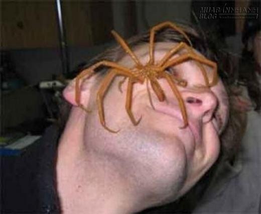 Bạn sẽ thấy sao nếu một con nhện thế này rơi vào mặt bạn?