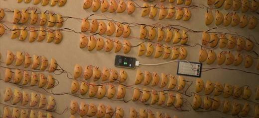 Cam có thể cung cấp nguồn điện để sạc cho iPhone, tuy nhiên, phải mất tới 595 trái cam mới có thể sạc đầy pin một chiếc iPhone.