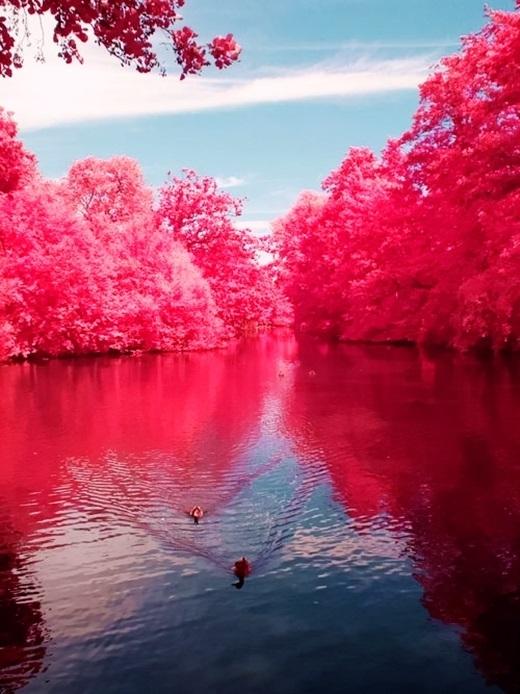 Ngọt ngào những địa điểm dành riêng cho các tín đồ màu hồng