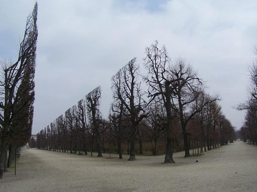 Có thể bạn sẽ lầm tưởng bức ảnh này được chụp từ một cảnh trong bộ phim viễn tưởng nhưng chúng đều là cây thật được cắt tỉa vô cùng cẩn thận để tạo ra các đường thẳng hoàn hảo.
