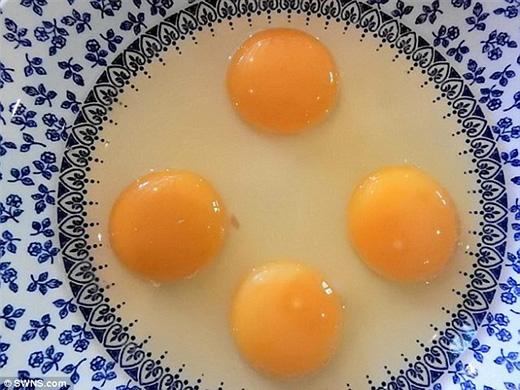 Há hốc mồm trước quả trứng gà có 4 lòng đỏ cực quí hiếm