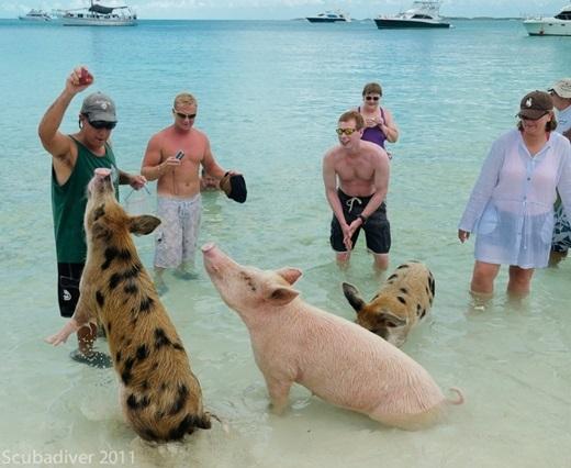 Tan chảy trước những hòn đảo động vật đáng yêu nhất thế giới