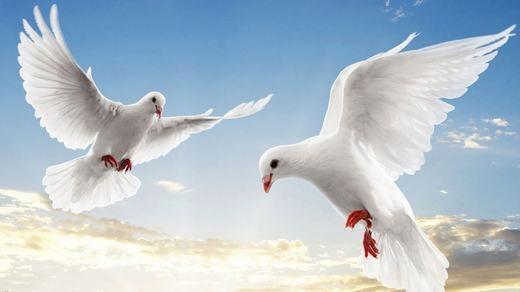 """Chim bồ câu là loài không thể """"xì hơi"""", vậy nếu ai """"cố tình gây chia rẽ nội bộ"""" thì bồ câu vô can nhé."""