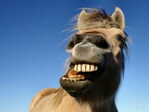 Bạn có biết, ngựa là loài động vật không hề biết nôn đấy!