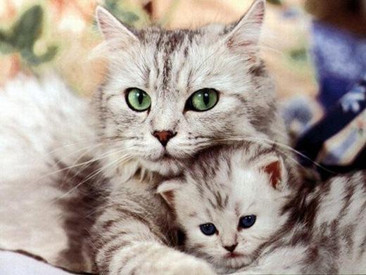 Mèo có tới hơn 100 ngữ điệu âm thanh.