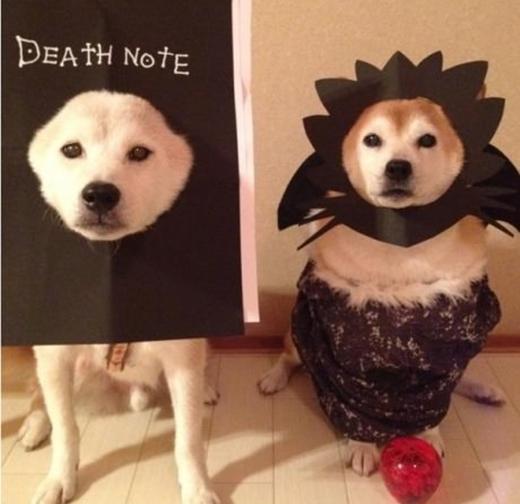 """Tưởng tượng """"Quyển sổ thiên mệnh"""" Death Note rơi vào tay chú chó Shiba này sẽ thế nào nhỉ?"""
