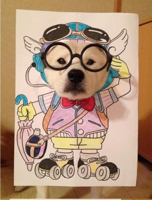 Ngạc nhiên chưa: loài chó Shiba cũng biết chơi cosplay!