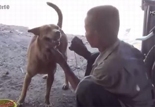 Sốc: Người đàn ông sống bằng sữa chó suốt 60 năm