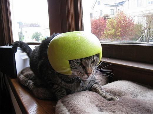 Tui cũng có mũ bảo hiểm đấy nhé!.