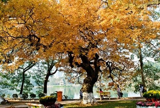 Bầu trời xanh trong, nắng nhè nhẹ, bốn bề là sắc vàng, sắc đỏ của hàng cây rợp bóng… còn gì tuyệt hơn tản bộ trên thảm lá vàng khô xào xạc dưới chân, hít thở khí trời Hà Nội và thưởng ngoạn toàn bộ khung cảnh nên thơ này?