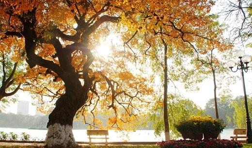 Ánh nắng rực rỡ len lỏi qua tán lá vàng vào một buổi sớm mai.