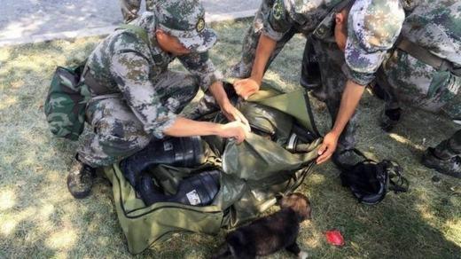 Xúc động trước cảnh lính cứu hỏa quên mình giải cứu động vật