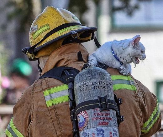 Một chú mèo vẫn đang rất hoảng loạn dù đã an toàn trong vòng tay của người lính cứu hỏa.