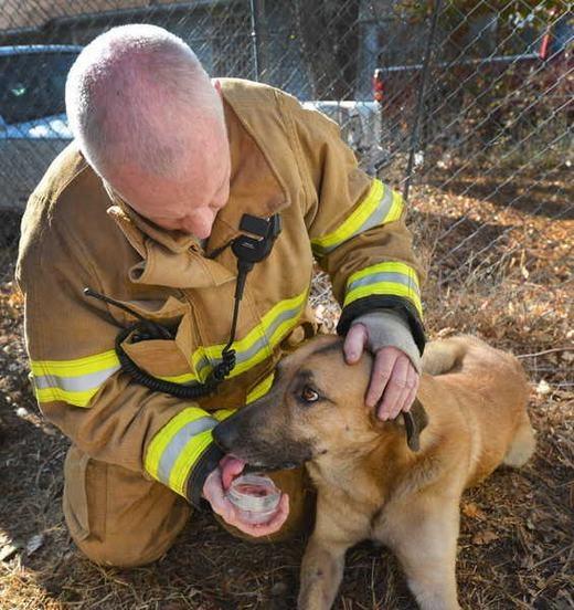 Một người lính cứu hỏa Fort Worth, Texas đang nỗ lực hồi sức cho chú chó.
