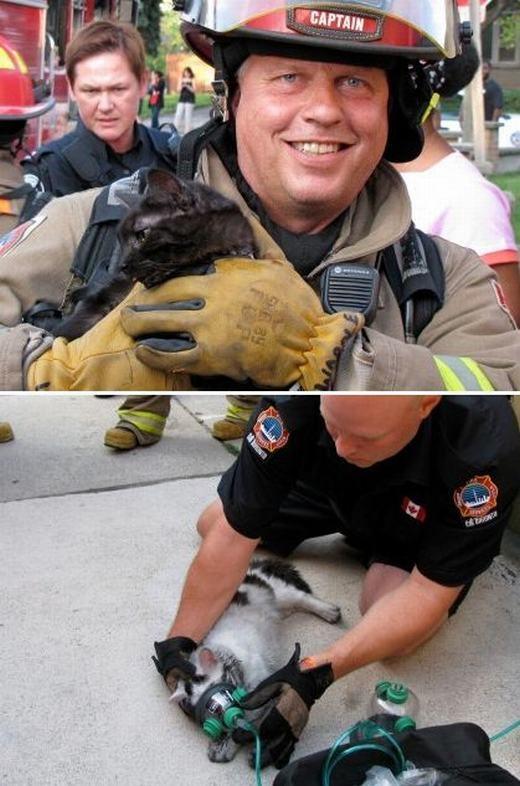 Những con vật tội nghiệp luôn được lính cứu hỏa nhiệt tình chăm sóc không khác gì so với con người.