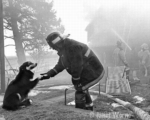 """Đây là bức ảnh nổi tiếng trên thế giới, đặc biệt là với lực lượng lính cứu hỏa. Có tên gọi là """"Bạn bè"""", bức ảnh nói về một người lính cứu hỏa với tình yêu thương động vật đã nán lại để đánh lạc hướng con vật, ngăn không cho chú chó lao vào căn nhà đang rực cháy."""
