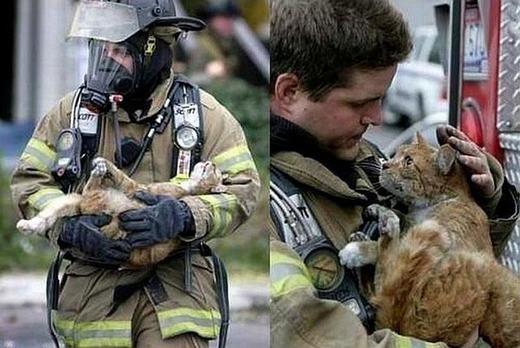 Chú mèo nhìn người lính cứu hỏa với ánh mắt biết ơn.
