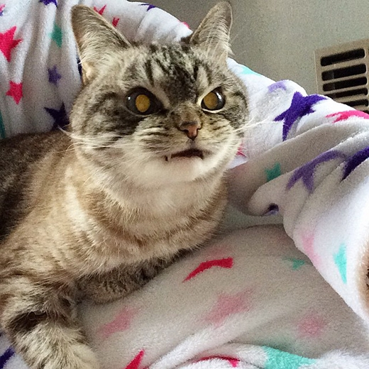 """Tuy có vẻ bề ngoài khá là """"đáng sợ"""", nhưngLokivẫn chỉ là một nàng mèo đỏng đảnh như bao nàng mèo khác mà thôi."""