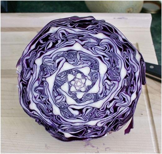 Lát cắt ngang của bắp cải quen thuộc là vậy, nhưng không phải ai cũng chiêm ngưỡng hết vẻ đẹp này.