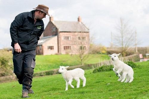 Sự xuất hiện chưa có lời giải của chú cừu 6 chân