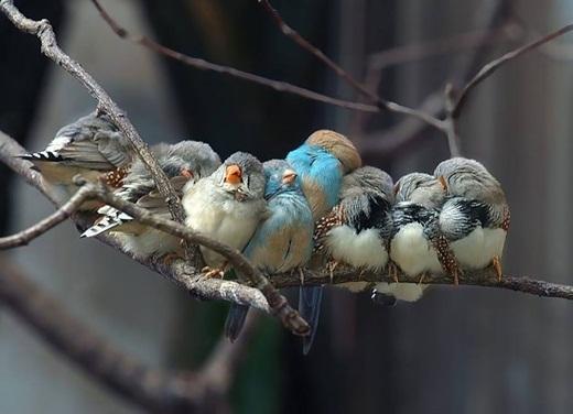 Một gia đình chim sẻ thông